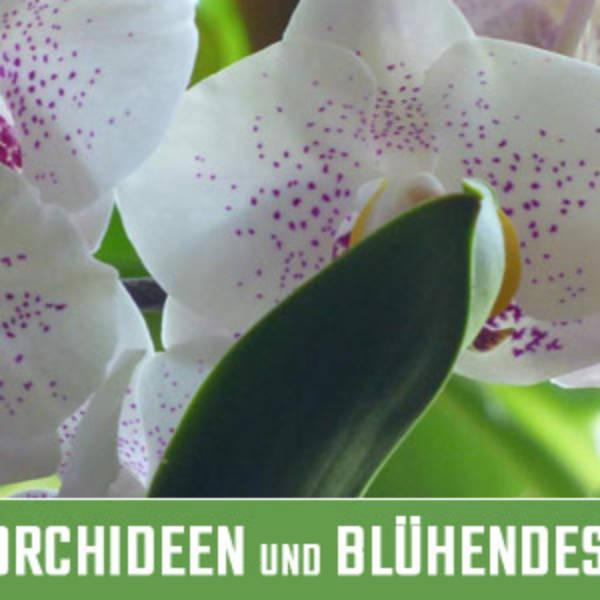 Orchideen und Blühendes