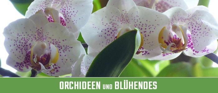 Orchideen und Blühendes Kategoriebild