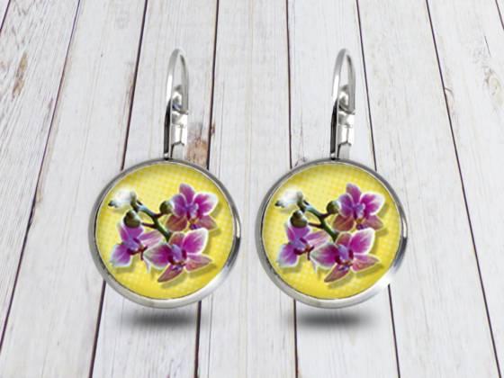 Schmuck Schmetterlingsorchidee Phalaenopsis
